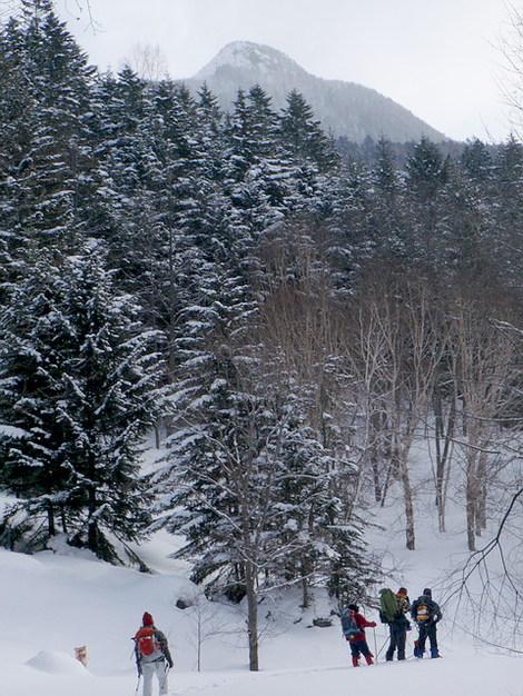 林道終点付近からピリベツ山頂2