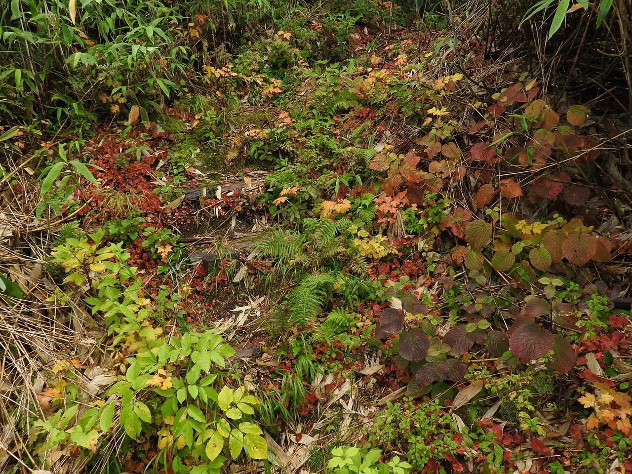 散策路の紅葉に癒される